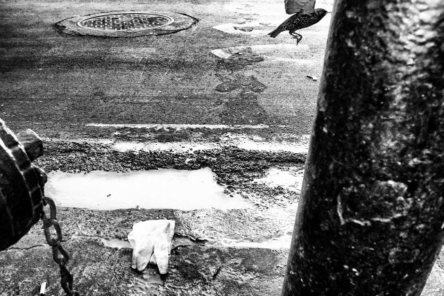 "Michael Ernest Sweet, ""The Human Fragment"""