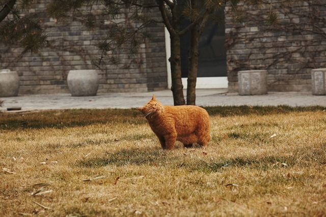 Another of Ai's cats (photo by Matt Robinson, courtesy 'Puss Puss' magazine)