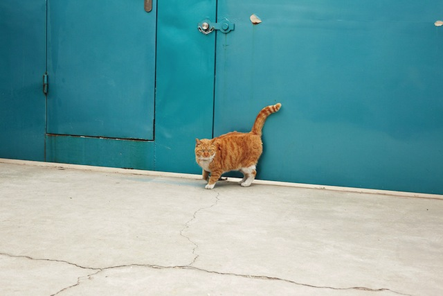 One of Ai Wei Wei's cats (Photograph by Matt Robinson, courtesy of Puss Puss Magazine)