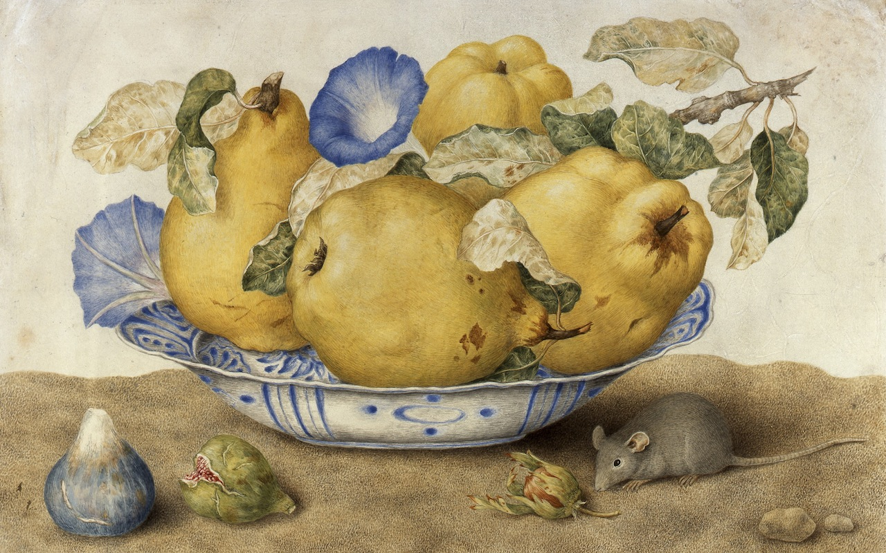 Giovanna Garzoni, Ceramic Bowl with Quinces, Morning Glories, Figs, Hazelnuts and a Mouse, 1651–1662, tempera on parchment. Collection of Silvano Lodi, Campione D'Italia. Courtesy of the Galleria Silvano Lodi & Due Milano.