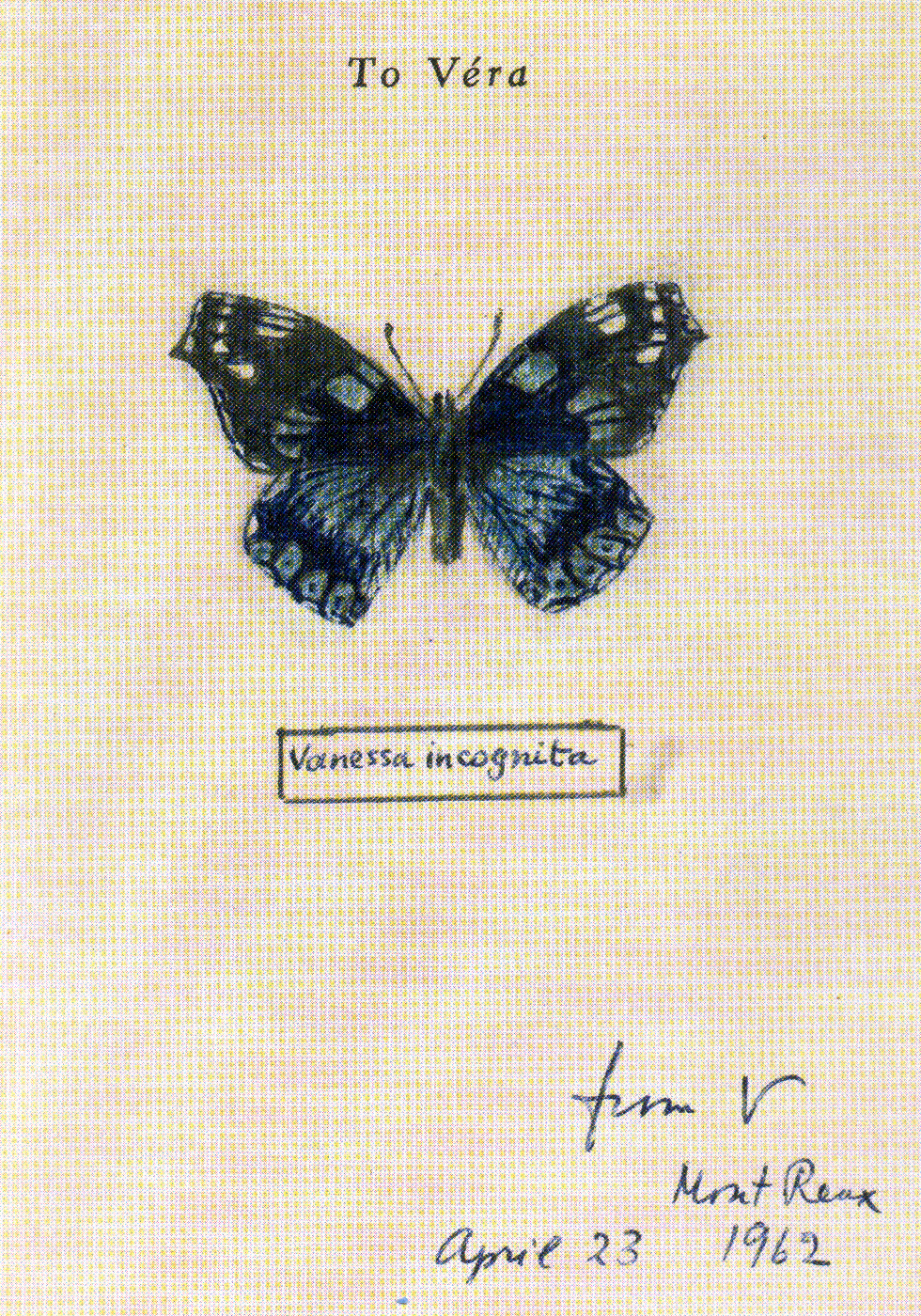 Fine Lines: Vladimir Nabokov's Scientific Art