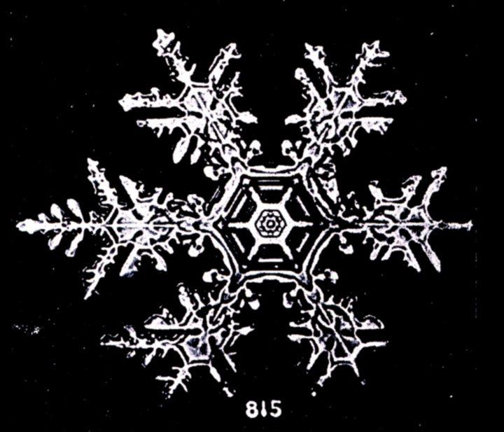 Snow flakes photographed by Wilson Bentley