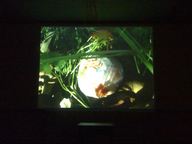 """""""For Gaza: The Land of Sad Oranges"""" 2010, Rania Stephan screened in the Museo Diffuso della Resistenza, della Deportazione, della Guerra, dei Diritti e della Libertà"""