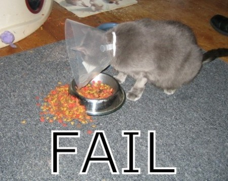 Image from lolcats.com