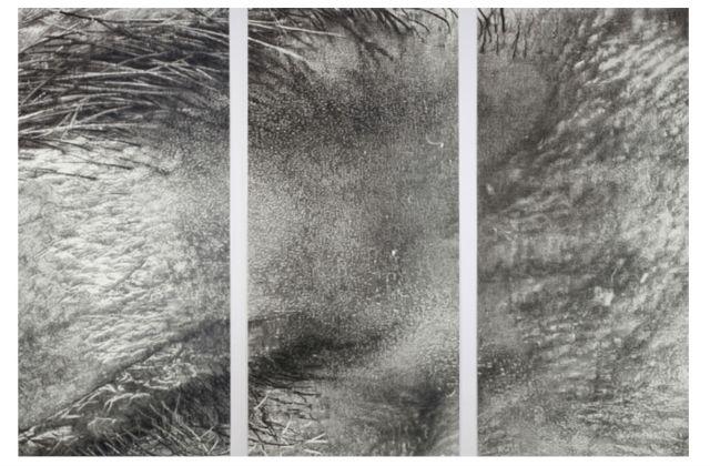 """Cynthia Lin, """"Crop1aAsideEyeEA"""" (2009) (All images courtesy Garis & Hahn)"""