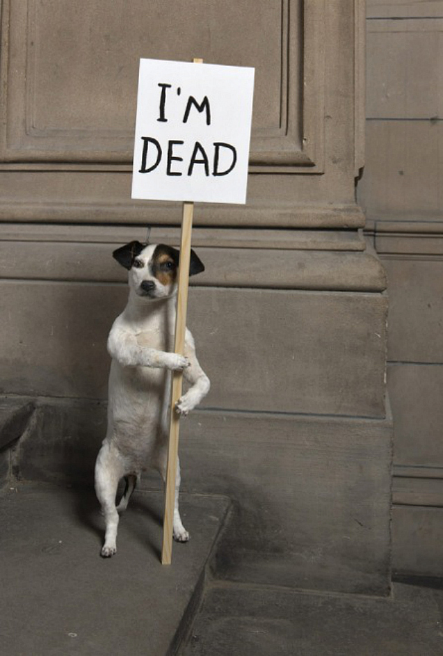 "David Shrigley, ""I'm Dead"" (2010) (courtesy Collection Hamilton Corporate Finance Limited, Kelvingrove Art Gallery and Museum)"