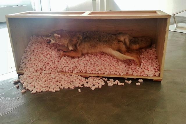 05 Coyote Piece