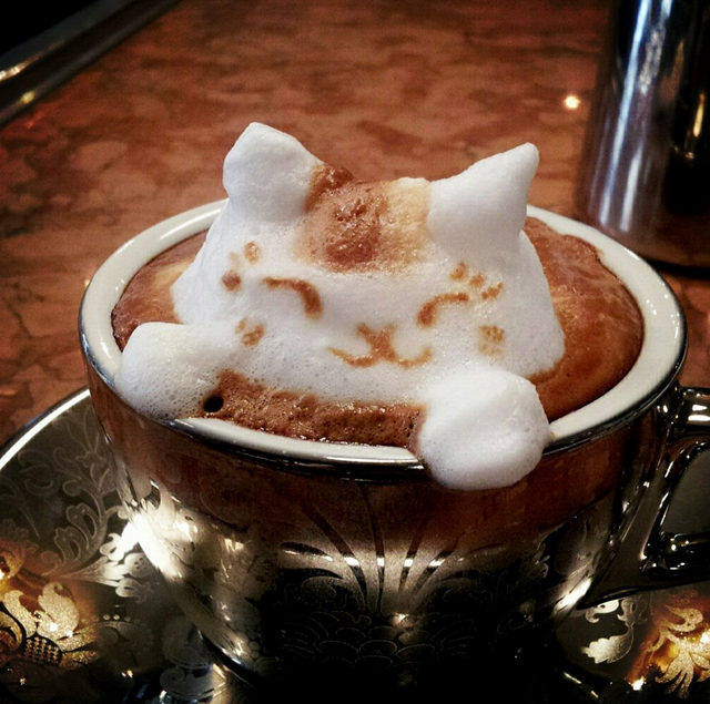 Kitty in a coffee cup