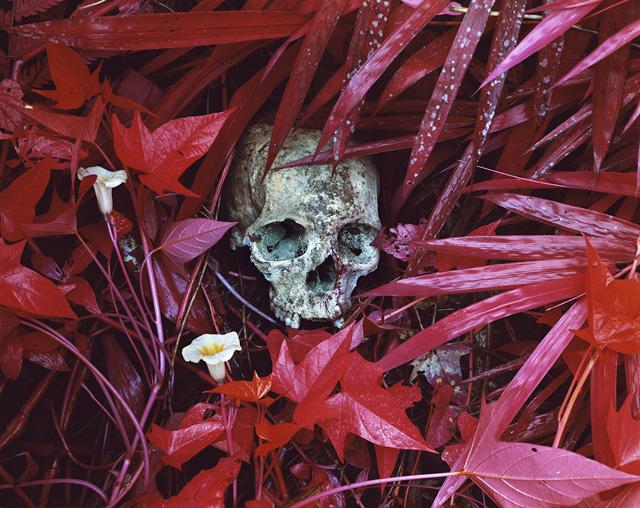 "Richard Mosse, ""Of Lillies and Remain"" (North Kivu, Eastern Congo, 2012), Digital c-print, 183 x 229 cm edition of 2"