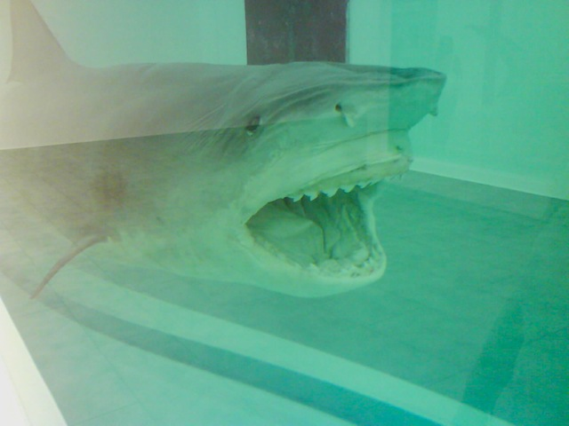 Shark84