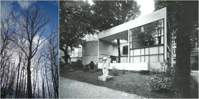 Trees (via Wikimedia); Le Corbusier's Pavillon de L'Esprit Nouveau (via strabrecht.nl)