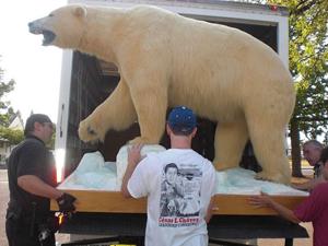 A polar bear on the move at the Jensen Arctic Museum (photograph by Andrew Parodi, via Wikimedia)