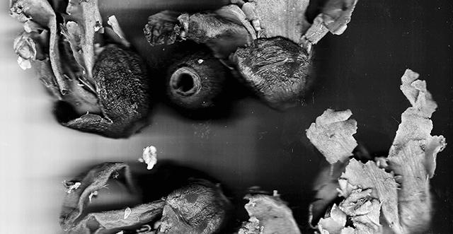 Rochelle Goldberg, #digestive eye #marvelous tea (detail)