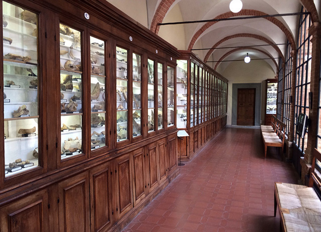 The display cases in the halls of the Accademia dei Fisiocritici have a timeless air.