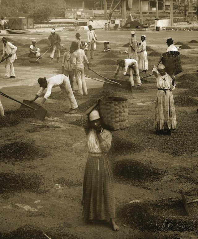 Slaves in the yard of a coffee farm | Vale do Paraíba, c. 1882 _ENLARGE