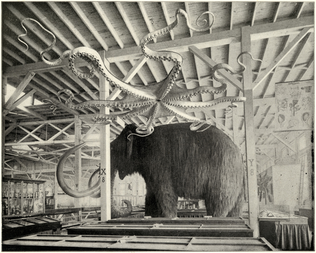 """Woolly mammoth and giant octopus models pictured here were on display in the Anthropological Building of the World's Fair (the octopus is on display in """"Opening the Vaults"""") (© The Field Museum)"""