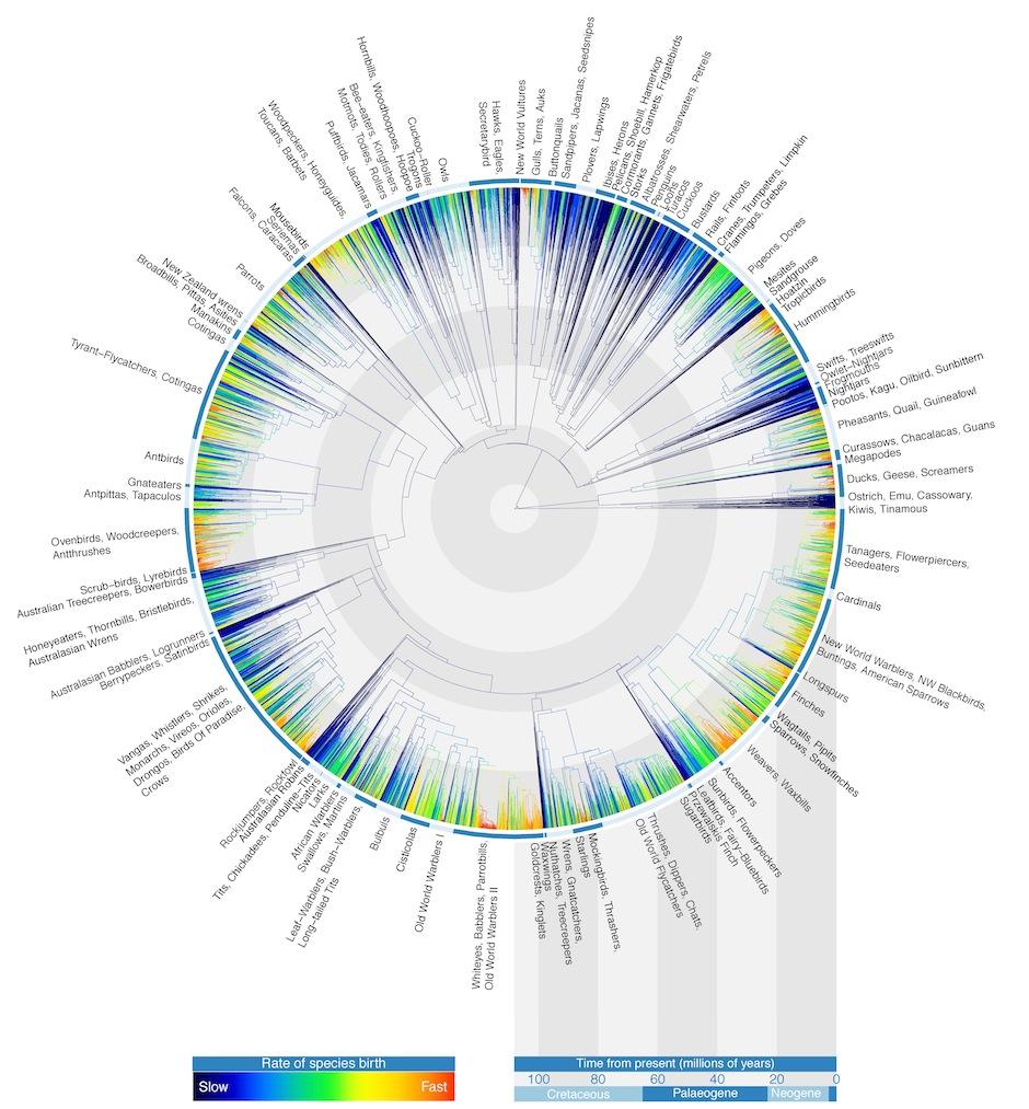 Accessing data through design in the history of visualizing science avian tree of life c gavin thomas walter jetz jeff joy pooptronica