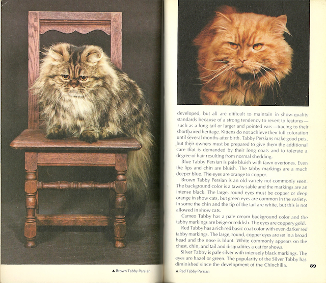 Spread from 'Cats of the World'