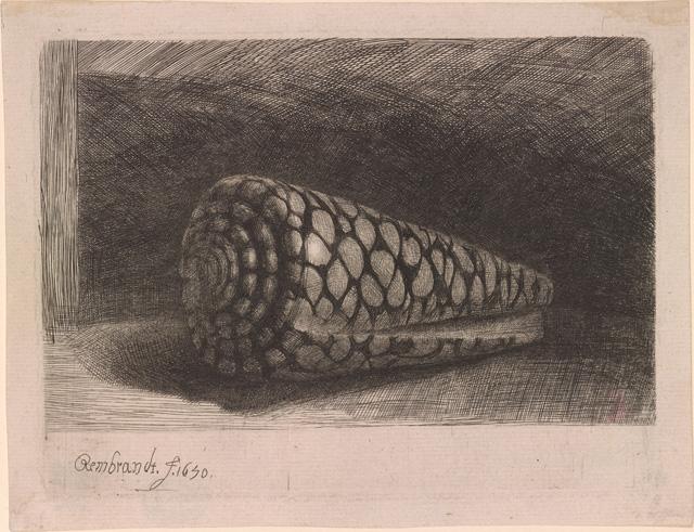 "Rembrandt Harmenszoon van Rijn, ""The Shell (Conus Marmoreus)"" (1650), etching, 97 x 132 mm"