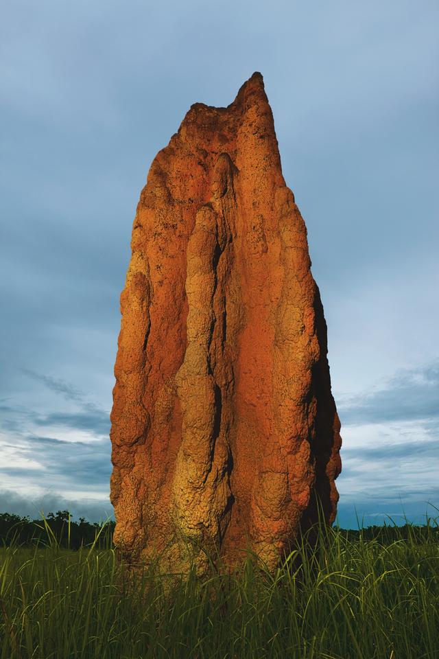 Cathedral Termite Mound (Nasutitermes triodiae) / Kakadu NP., Northern Territory, Australia