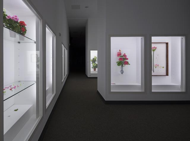 "Alberto Baraya, ""Expedition Berlín, Herbarium of Artificial Plants"" (2013–ongoing), mixed media, Dimensions variable, installation view (image courtesy Alberto Baraya; Galeria Nara Roesler, São Paulo, photo by Anders Sune Berg)"