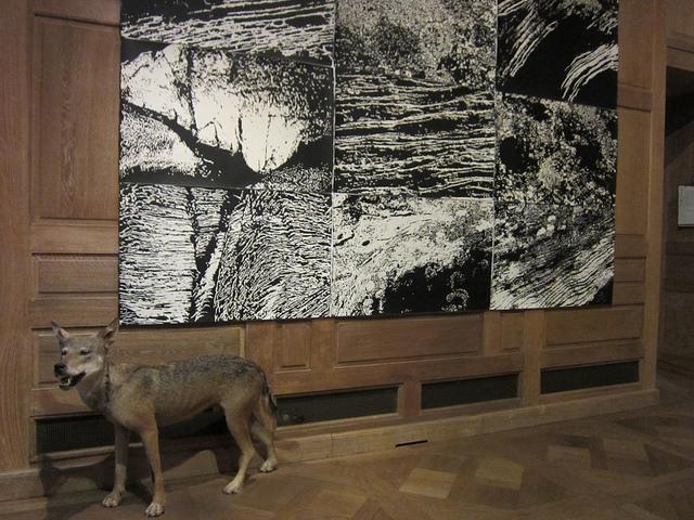 """Lin Utzon, """"Cosmic Dance"""" at the Musée de la Chasse et de la Nature in Paris"""