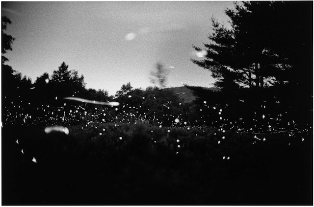 Gregory Crewdson, Untitled, 1996, © Gregory Crewdson. Courtesy Gagosian Gallery (all photographs courtesy Wave Hill unless indicated)
