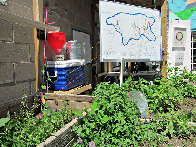 Invasive Pigments Garden at the Center for Strategic Art and Agriculture, Silent Barn