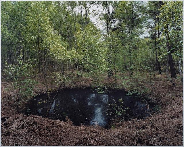 Henning Rogge  #54 (Altwarmbüchener Moor), 2013   Analogue C-print  18 3/16 x 22 inches  Edition 1 of 4