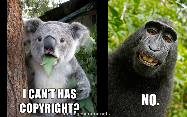 US Copyright Office Says Animal Authors Aren't Protected by Copyright