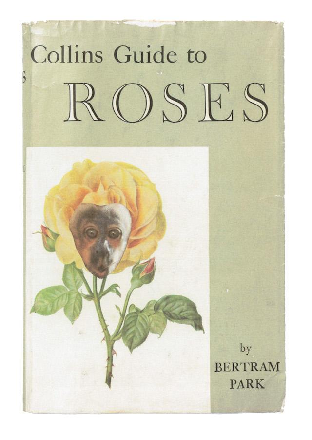 14_OrtonHalliwell_Roses