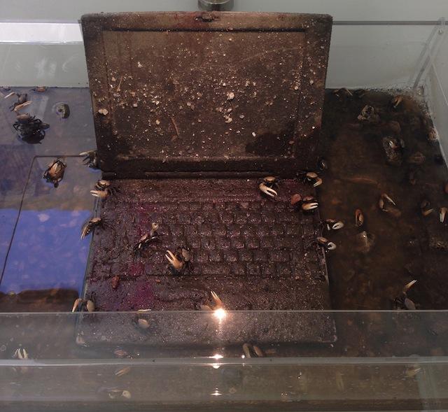 "Max Hooper Schneider, ""The Last Caucasian War"" (2014), Acrylic tank, 1996 Toshiba Tecra 700CT, polymer resin, mud, leaf litter, gravel, found detritus, Ocypodid crabs (Genus Oca)"