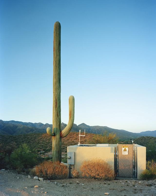 Robert Voit, Scottsdale, Arizona, USA, from the series New Trees, 2006, C-print, ©Robert Voit