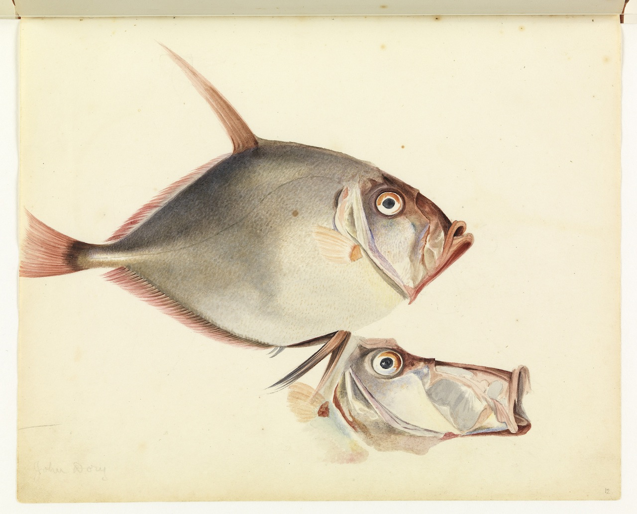 """William Buelow Gould, """"Silver dory"""""""