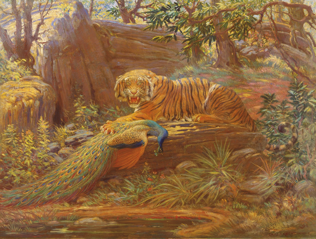 """""""Bengal Tiger and Peacock,"""" (1928) by Charles R. Knight (Courtesy of Rhoda Knight Kalt)"""