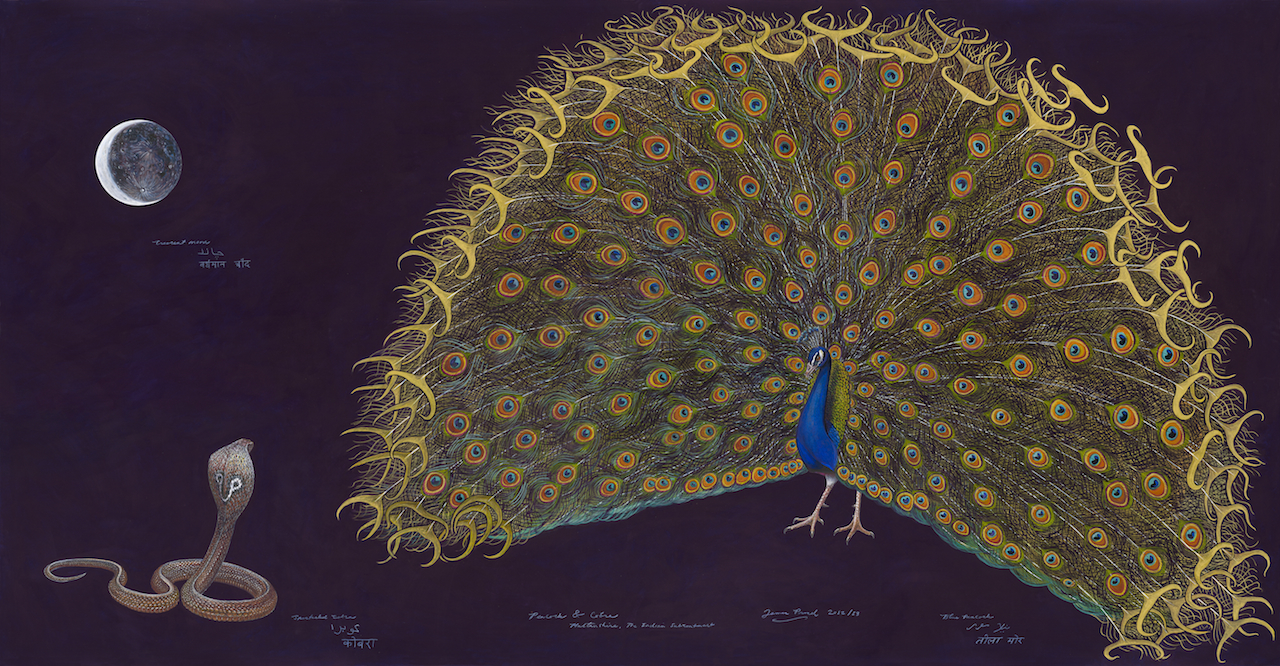 """""""Peacock and Cobra,"""" (2013) by James Prosek (b. 1975 (Courtesy of the artist and Schwartz-Wajahat, New York)"""