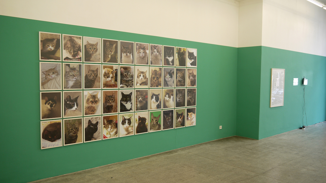 """Anna Jermolaewa, installation view of """"Untitled (Hermitage Cats)"""" (2013) (All images courtesy the artist)"""