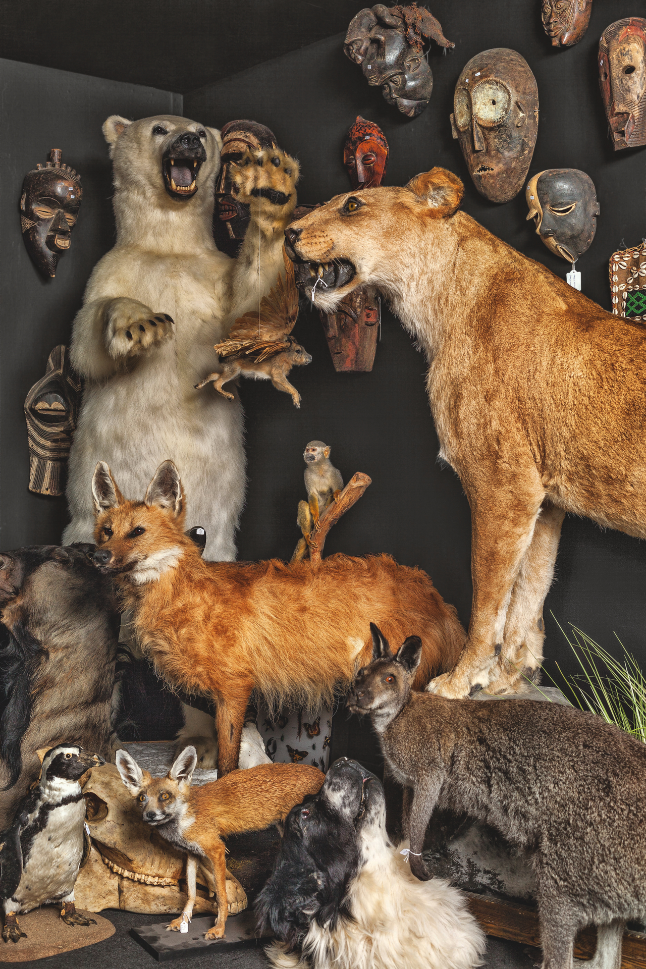 Display of taxidermy (photograph by Oskar Proctor)