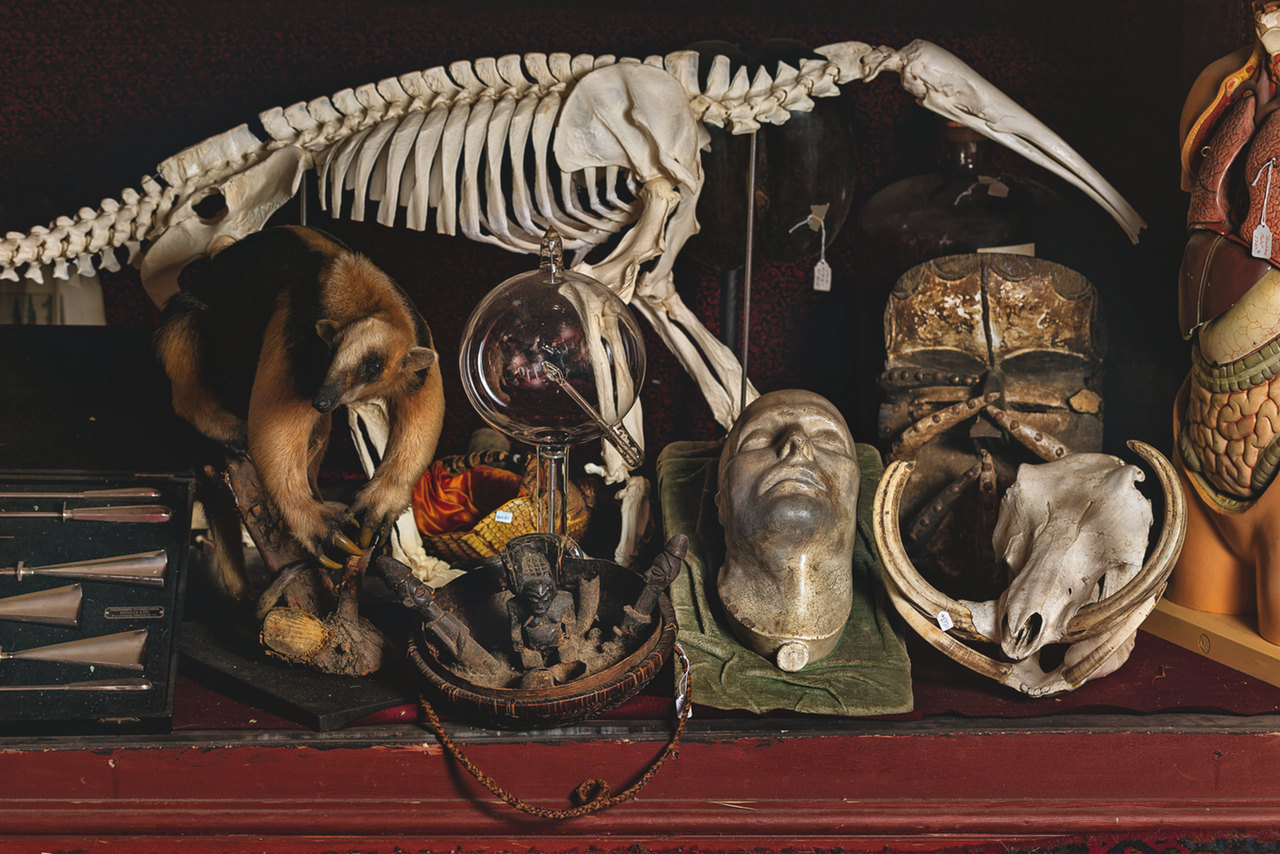 Napoleon's death mask & other objects (photograph by Oskar Proctor)