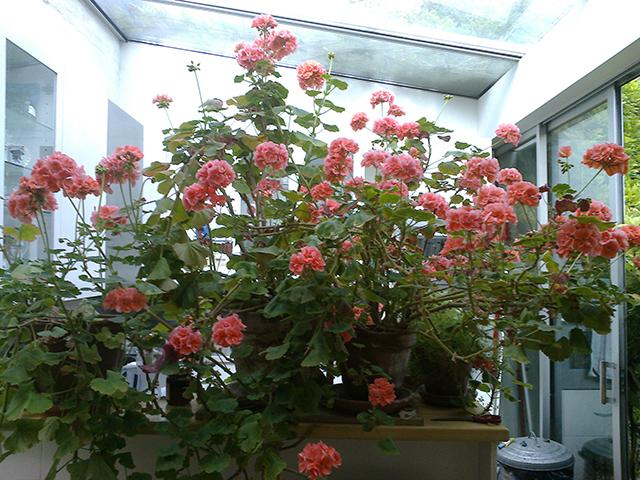 Floral life in Sherman Sam's studio