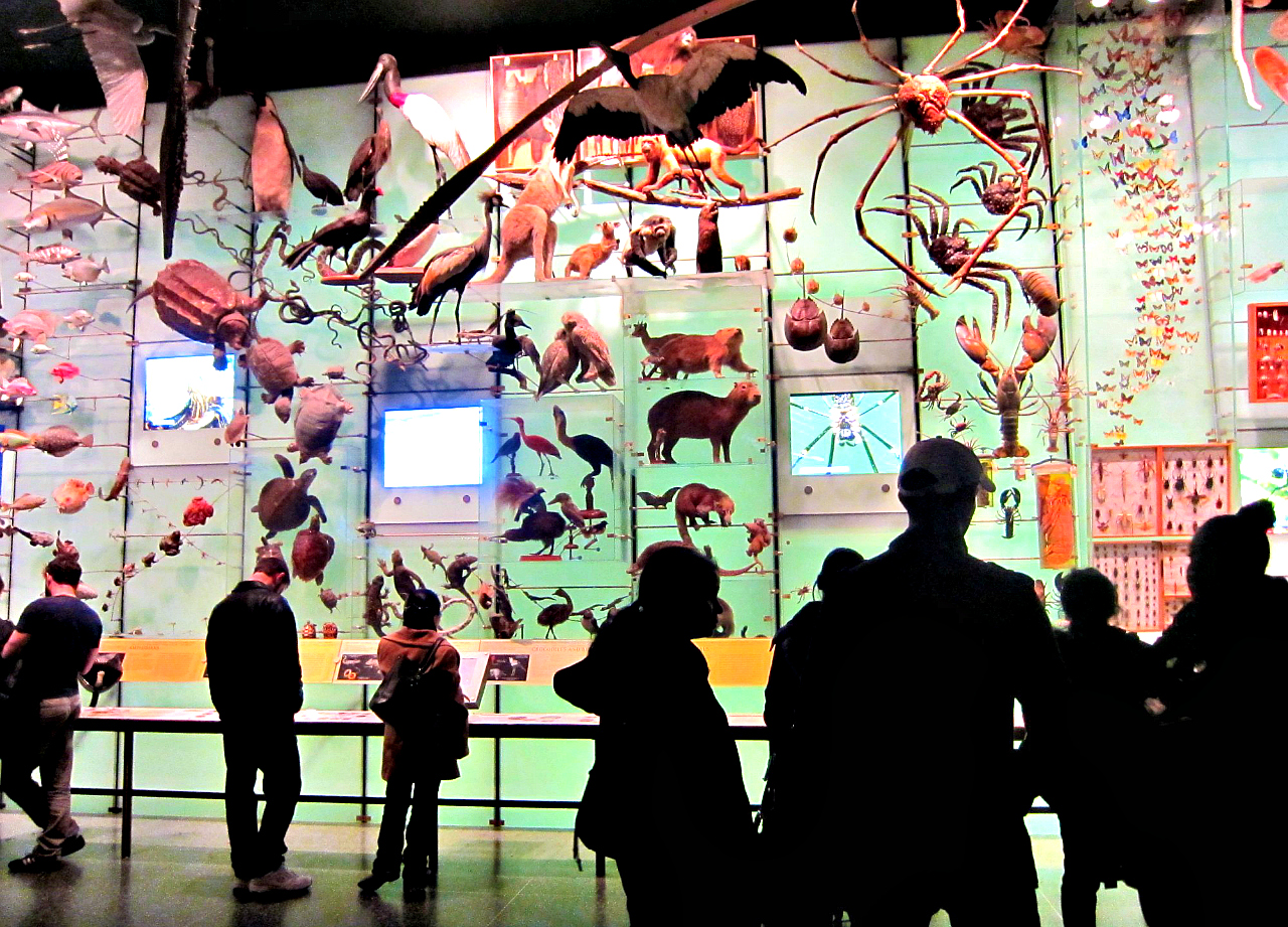 Biodiversity gallery in AMNH (photograph by the author)