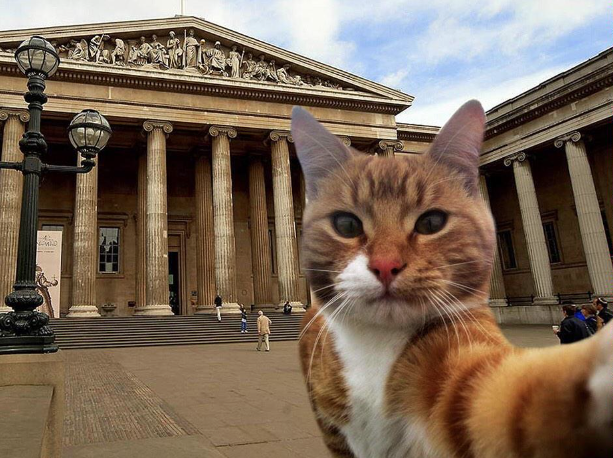 Is @CuratorialCats a victim or a perpetrator in this #museumselfie crime? (via @CuratorialCats)
