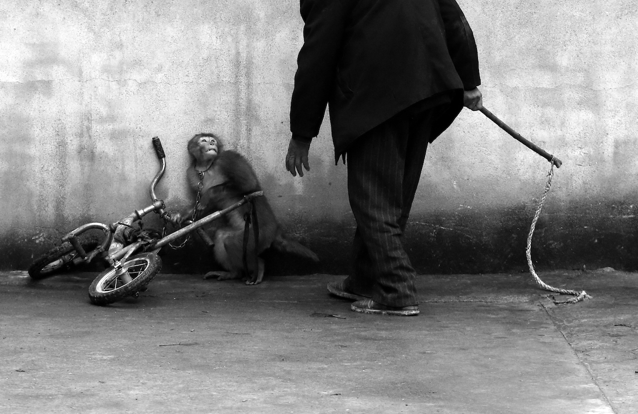 First Prize Nature Category, Singles Yongzhi Chu, China Suzhou, Anhui Province, China A monkey being trained for circus cowers as its trainer approaches. With more than 300 roupes, Suzhou is known as the home of the Chinese circus.