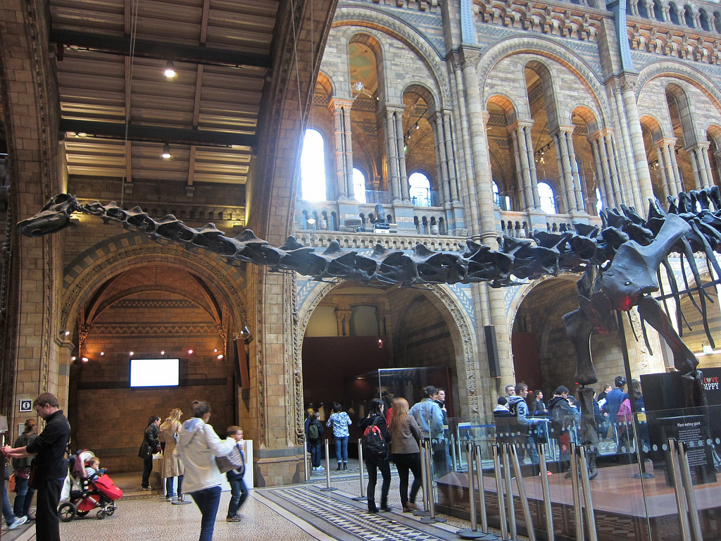 Dippy's neck extending from the hall (photograph by the author)