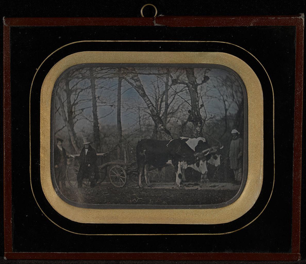 "Jean-Gabriel Eynard, ""Jean-Gabriel Eynard with two servants and an ox-drawn wagon"" (1850), daguerreotype (J. Paul Getty Museum, via Wikimedia)"