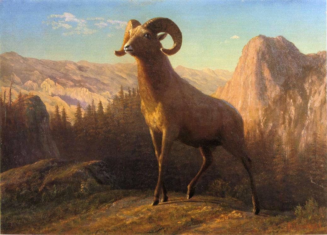 "Albert Bierstadt, ""A Rocky Mountain Sheep, Ovis, Montana"" (circa 1879) (image via Wikimedia Commons)"