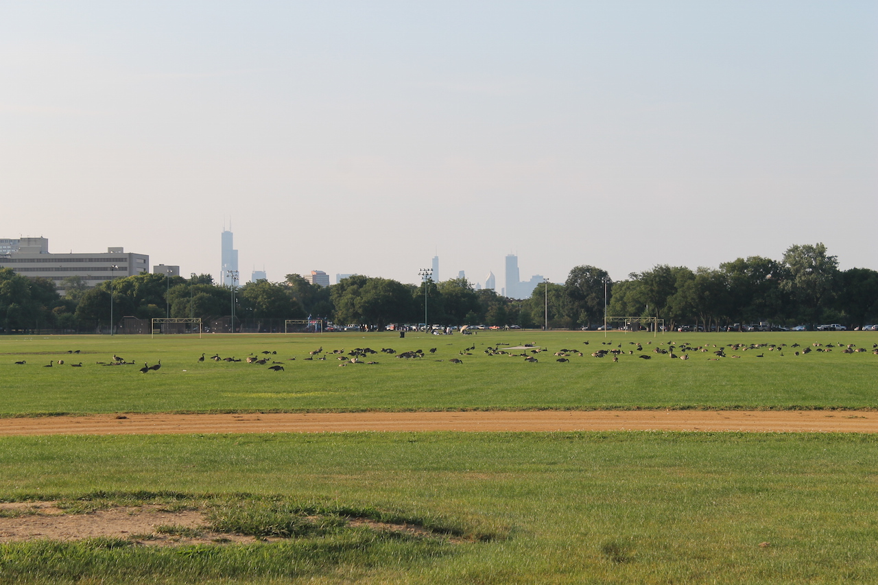 The Chicago skyline as seen from Washington Park (photo by Connie Ma/Flickr)