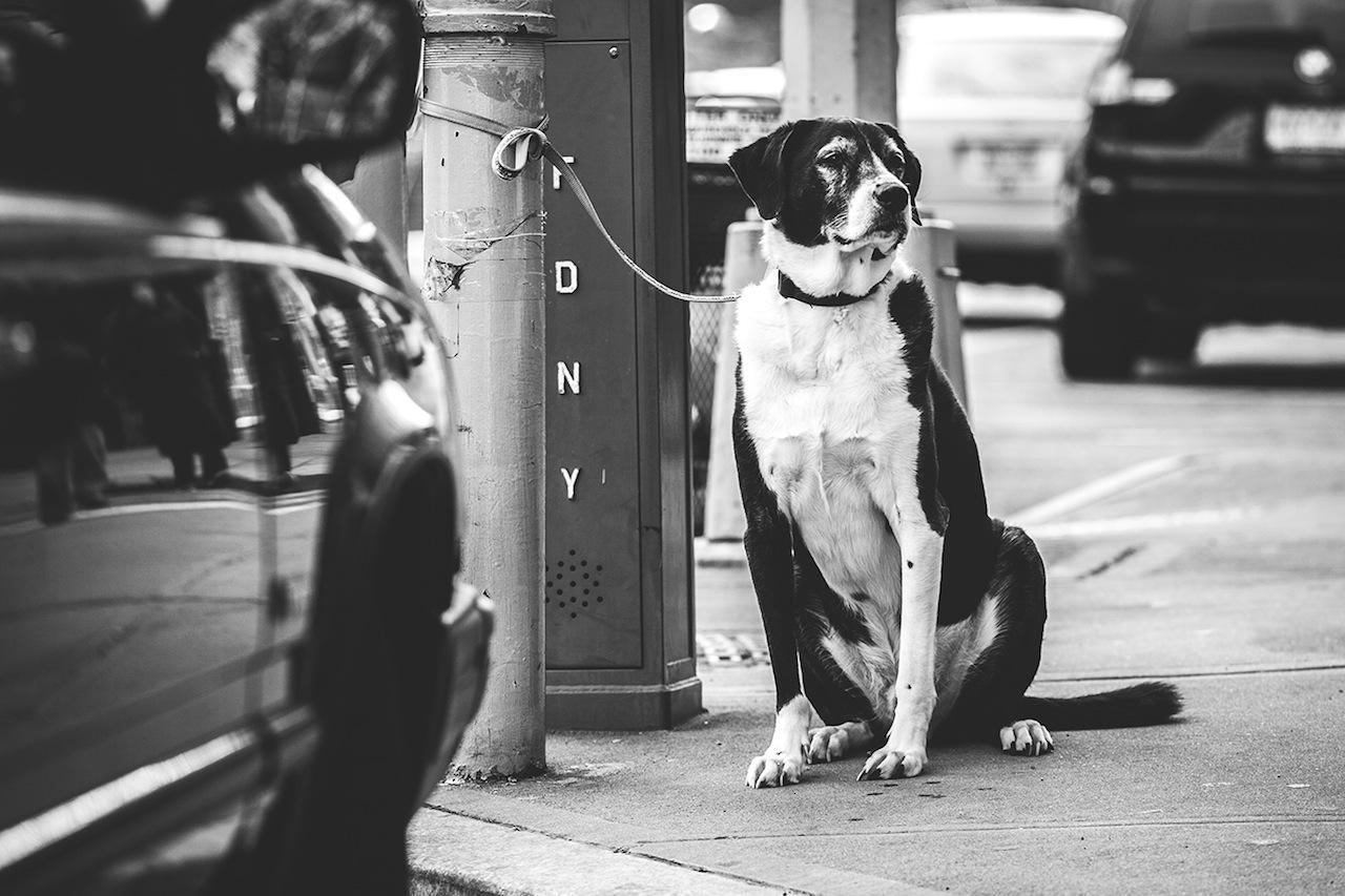 Dog in Brooklyn Heights