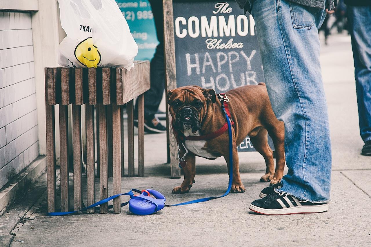Dog in Chelsea