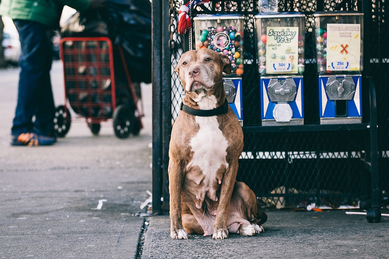 Dog in Crown Heights (All images courtesy of Erik Carter)
